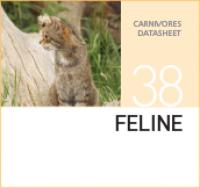 Корм для кошачьих Feline