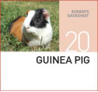 Корм для Морских Свинок Guinea pig