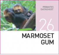 Жвачка для Мартышек Marmoset Gum
