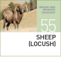 Корм для овец SHEEP (LOCUSH)