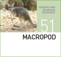 Корм для кенгуру MACROPOD