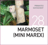 Корм для Мартышек Marmoset Mini Marex